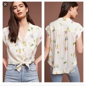 Anthropology cactus top